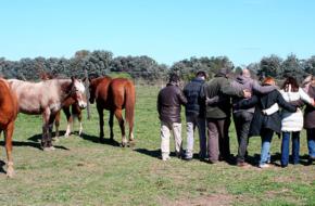 Coaching Con Caballos Y Liderazgo