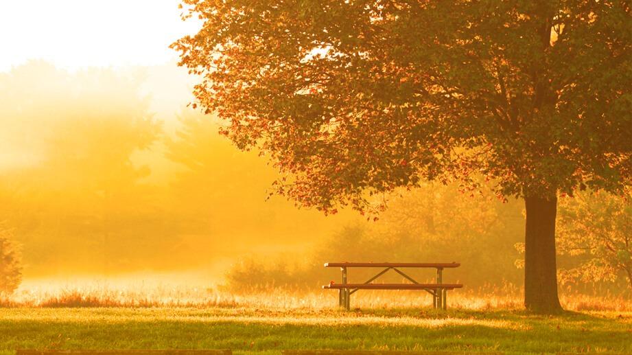 Mindfulness Y Sus Beneficios